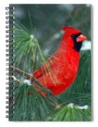 The Santa Bird Spiral Notebook
