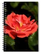 The Secret Rose Spiral Notebook
