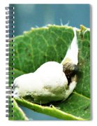 The Shy Cockatoo Spiral Notebook