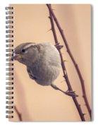 The Sideways Sparrow Spiral Notebook