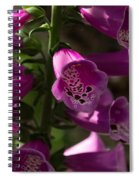 The Splendor Of Foxgloves Spiral Notebook