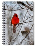 Blue Eyes In The Snow Cardinal  Spiral Notebook