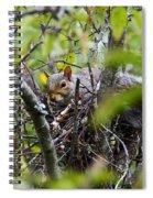The Squirrel  Spiral Notebook