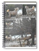 The Stallion Lives In The Country Spiral Notebook