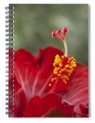 The Star Of Dawn Spiral Notebook
