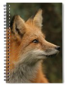 The Stare Spiral Notebook