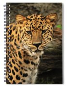 The Stare Down Spiral Notebook
