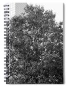 The Survivor Tree In Black And White Spiral Notebook