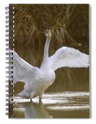 The Swan Spreads Its Wimgs Spiral Notebook