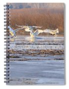 The Swans Return Spiral Notebook