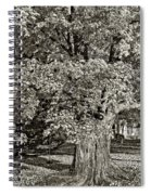 The Swinging Tree Sepia Spiral Notebook