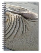 The Thinker - Elephant Seal On The Beach Spiral Notebook