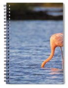 The Three Flamingos Spiral Notebook