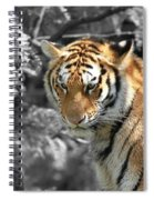 The Tiger Spiral Notebook