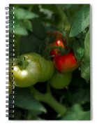 The Tomato Plant Spiral Notebook