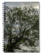 The Tree With His Feet In Water Spiral Notebook