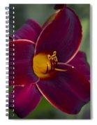 The Unsurpassable Daylily Spiral Notebook