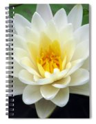 The Water Lilies Collection - 03 Spiral Notebook