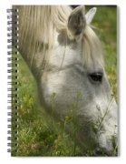 The White Mare  Spiral Notebook