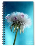 The Wish Spiral Notebook