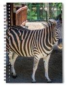 The Zebra Spiral Notebook