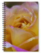 There's Nothing Like The Beauty Of A Rose  Spiral Notebook