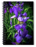 Colors Of Iris Spiral Notebook