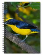 Thick-billed Euphonia Spiral Notebook