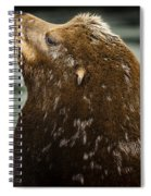 Things Are Looking Up-sealion Spiral Notebook