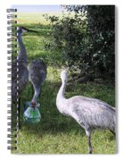 Thirsty Cranes Spiral Notebook