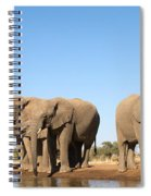 Thirsty Elephant Herd Spiral Notebook