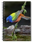 Thirsty Painted Bunting Spiral Notebook