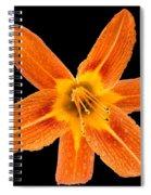 This Orange Lily Spiral Notebook