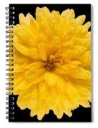 This Yellow Chrysanthemum Spiral Notebook