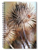 Thistle Seedheads Spiral Notebook