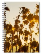 Thistles In The Sunset Spiral Notebook