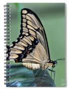 Thoas Swallowtail Butterfly Spiral Notebook