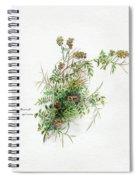 Thorny Burnet C1950 Spiral Notebook