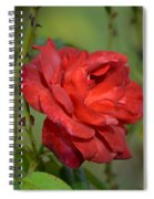Thorny Red Rose Spiral Notebook