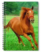 Thoroughbred Filly Spiral Notebook