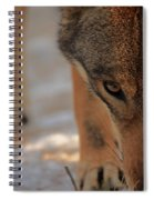 Those Eyes Spiral Notebook