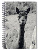 Three Alpaca Friends Spiral Notebook