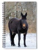 Three Amigos Spiral Notebook