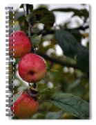 Three Apples Spiral Notebook