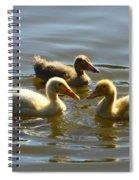Three Baby Ducks Swimming Spiral Notebook