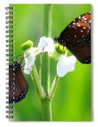 Three Beauties Spiral Notebook