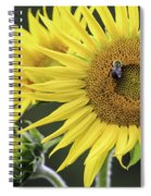 Three Bees On A Sunflower Spiral Notebook