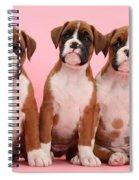 Three Boxer Puppies Spiral Notebook