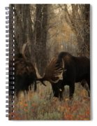 Three Bull Moose Sparring Spiral Notebook