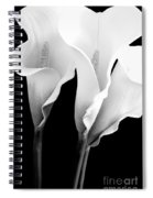 Three Calla Lilies In Black And White Spiral Notebook